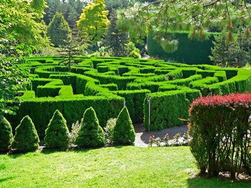 VanDusen_Botanical_Garden_maze